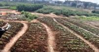Đà Nẵng: nước giếng khoan cạn khô, mặn