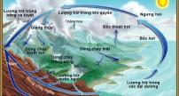 Vòng tuần hoàn nước là gì?