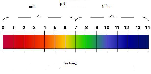 Nồng độ pH là gì? Và có ảnh hưởng như thế nào đến sức khỏe người sử dụng?