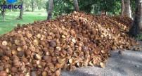 Quy trình làm than hoạt tính gáo dừa